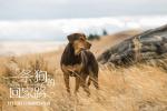 《一条狗的回家路》曝特辑 广袤山河不敌笃定深爱