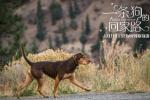 为爱而归! 《一条狗的回家路》年末必备温暖之旅