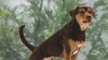 """《一条狗的回家路》""""伴你回家""""预告"""