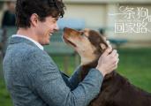 """《一条狗的回家路》发布特辑 采访真实""""狗民"""""""