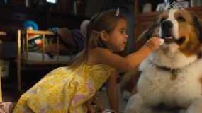 《一条狗的使命2》)正式预告片