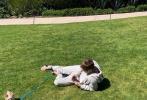 近日,有博主晒出贾斯汀·比伯和海莉·鲍德温遛狗的对比照,引发网友热议讨论。相比海莉将狗狗奥斯卡抱在怀中,疼爱的捧在手中。比伯却为了解放双手玩手机,将狗狗的牵引绳拴在了脚上。被比伯拎起的奥斯卡,一副生无可恋的模样。