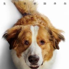 一条狗的使命2