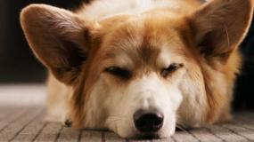 《一条狗的使命2》回归版预告片