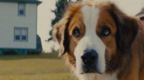 《一条狗的使命2》定档预告片