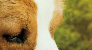 《一条狗的使命2》内地定档 刘宪华全新加盟