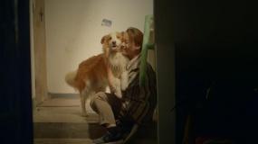 《一条狗的使命2》母亲节特辑