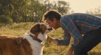 《一条狗的使命2》终极预告