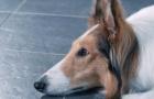 《一條狗的使命2》素人暖心特輯