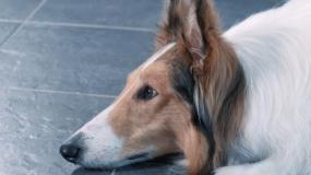 《一条狗的使命2》素人暖心特辑