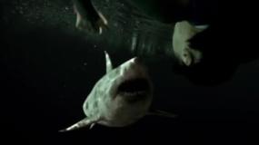 《鲨海47:猛鲨出笼》预告片