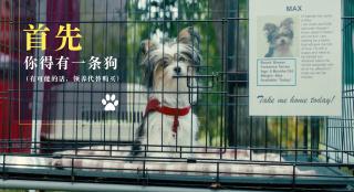 《一条狗的使命2》掀养狗热 刘宪华曝养狗秘诀