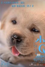 《小Q》海报萌力升级融化偏见 人狗相守动人催泪