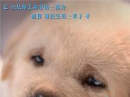 《小Q》海報萌力升級融化偏見 人狗相守動人催淚