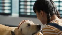 """电影《小Q》曝""""导盲犬养成记""""特辑"""