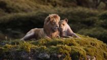 电影《狮子王》发布日版主题曲版预告