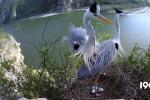 《鹭世界》首曝预告 苍鹭携群鸟展现黄河生存图鉴