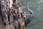 《鹭世界》回归自然获好评 让你和家人一起感动