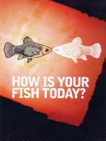 今天的鱼怎么样?