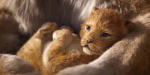 """不是""""真獅版""""!《獅子王》只有一個鏡頭是實拍"""