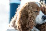 《小姐与流氓》公布预告 从狗狗视角展开温馨历险