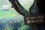 首曝定档海报!《侏罗纪世界2》番外短片即将上线