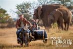"""今日,电影《白狮奇缘》释出一组""""狮乐园""""版海报和剧照,展现了软萌的白狮幼崽与米娅一家和谐共处的日常,画面十分有爱。南非大草原的广阔风貌也尽收眼底,令人向往。"""