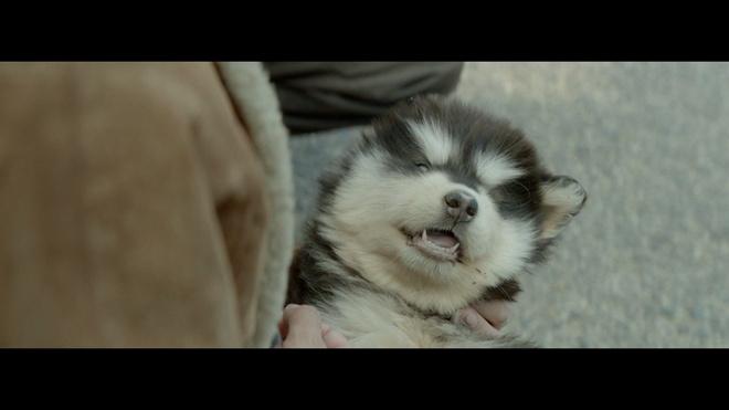 宠物电影《小Q》有什么魔力让硬汉任达华也落泪