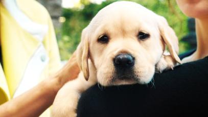 温情解析导盲犬《小Q》:无声陪伴是最长情的告白
