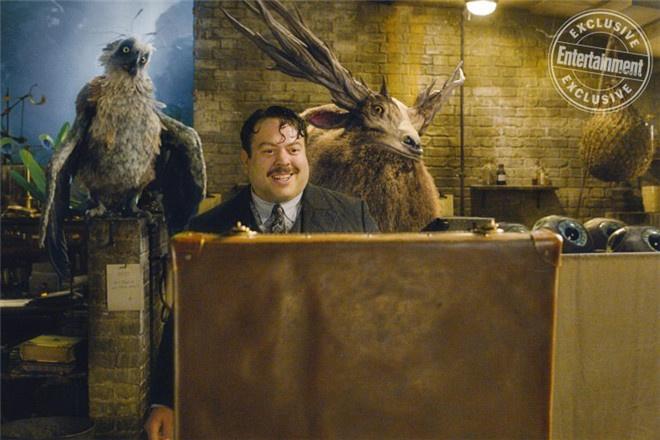 《神奇动物3》明年2月开拍 罗琳正加速创作剧本