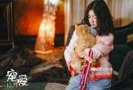 """由徐峥监制,刘瑞芳总制片人,杨子导演的电影《宠爱》11月7日发布了一支""""最特别的宠爱""""特辑,曝光了小动物们的戏份和拍摄幕后。这一次称得上是群星荟萃,6只小动物中不乏各个表演经验丰富的好莱坞老戏骨。"""