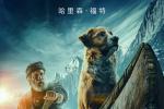 《野性的呼唤》曝中文海报 展现冰原荒野的冒险