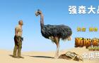 """《勇敢者游戲2:再戰巔峰》""""鴕鳥大戰""""片段曝光"""
