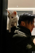 宠物博主上线!谢霆锋露侧颜宠物猫骑肩头超帅气