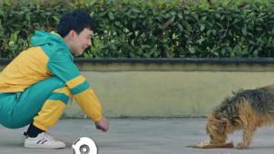 《宠爱》刷新国产宠物电影票房纪录 《亲爱的新年好》戳中痛点