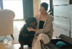 """由徐峥监制,刘瑞芳总制片人,杨子执导的《宠爱》正在全国热映中。1月8日,电影曝光了两人的特辑,从即兴发挥的超甜日常,到真情实感送别年老的狗狗,默契十足的两人全情投入,看得观众笑泪交加,更为其中对爱的诠释深深打动,""""爱情绝不止热烈,更是长长久久的责任与守护""""。"""