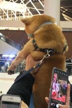 被迫追星! 粉丝为吸引刘昊然注意力当众举柴犬