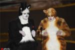 视效协会抗议奥斯卡调侃《猫》:我们不是替罪羊