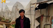 最美的平凡:菜农秦大安 骑行千里为武汉医疗队送上新鲜蔬菜