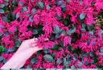 """3月24日,张馨予通过社交账号晒出一组春意盎然的近照,并配文表示:""""每天都会看看这些花苞和小芽,看着它们的变化和成长,感觉很神奇""""。"""