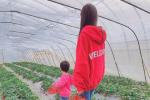 Angelababy带小海绵摘草莓 晒亲子照动作神同步