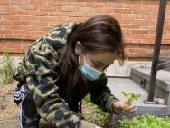 Angelababy發布《種菜日記》 兒子小海綿干農活