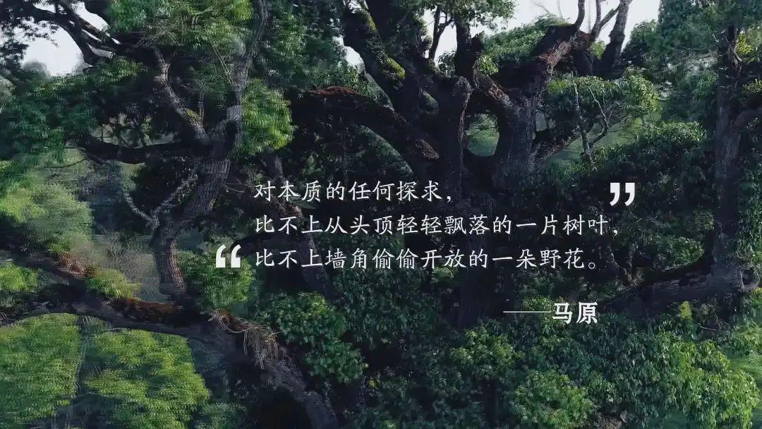 """温州网:纪录片《文学的一样平常》:这才是""""憧憬的生涯""""! 第28张"""
