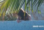 """當地時間6月20日,墨西哥圣路盧卡斯,""""甜茶""""蒂莫西·柴勒梅德與新女友艾莎·岡薩雷斯現身度假。當天,""""甜茶""""和艾莎在泳池戲水,兩人時而低頭耳語,時而激情熱吻,表情甜蜜,寸步不離,十分親膩。"""