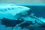 《阿凡达2》曝光片场照 水下戏份成影片重点