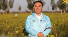 大同市农业农村局局长感谢李佳琦带货大同黄花!