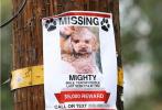 7月22日,奥兰多·布鲁姆在搜寻走失爱犬Mighty第七日后,在专门为Mighty设立的FaceBook主页发布了一则沉痛的消息,Mighty已经去了天堂。