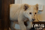 电影《白狮奇缘》7月29日发布终极预告,全方位揭秘硬核少女米娅和珍稀白狮查理一路以来相伴成长、共同经历患难的旅程。预告中,随着白狮幼崽的长大,动物与人类之间的冲突逐渐升级,成年白狮陷入危机。少女米娅能否突破重重障碍、拯救白狮,成为影片一大看点。