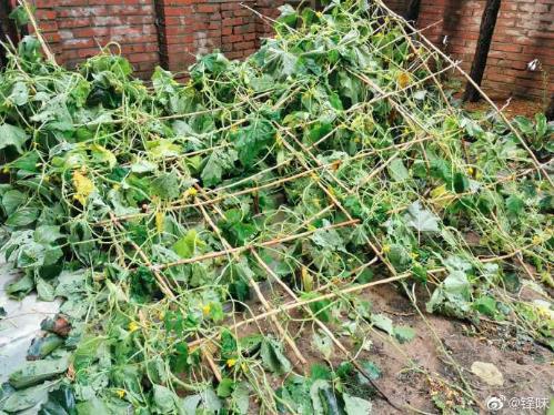 allbet开户:谢霆锋菜园子塌了:共损失了4个茄子、9颗番茄 第2张