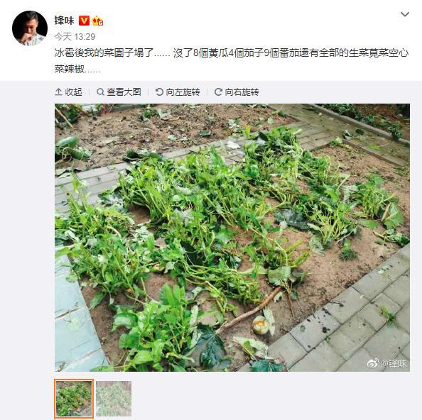 allbet开户:谢霆锋菜园子塌了:共损失了4个茄子、9颗番茄 第1张